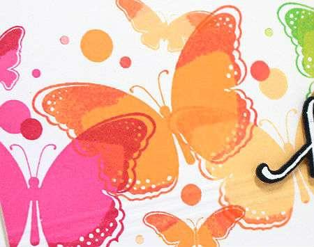 RainbowButterfliesCU